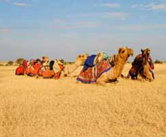 Holiday Package Kutch